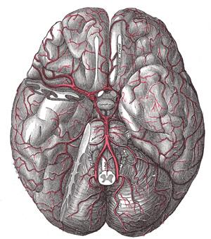Ketolysefähigkeit des Gehirns