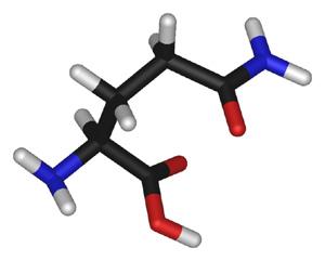 BCAAs und L-Glutamin – Wirkung, Einnahmeempfehlung und kritische Bewertung
