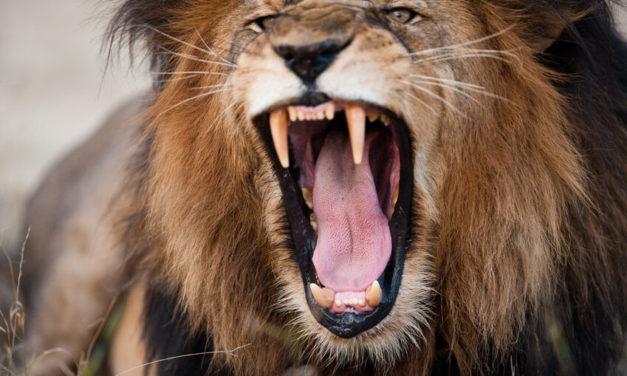Daily Discipline – Hör auf hinterher zu laufen und tu, was getan werden muss!